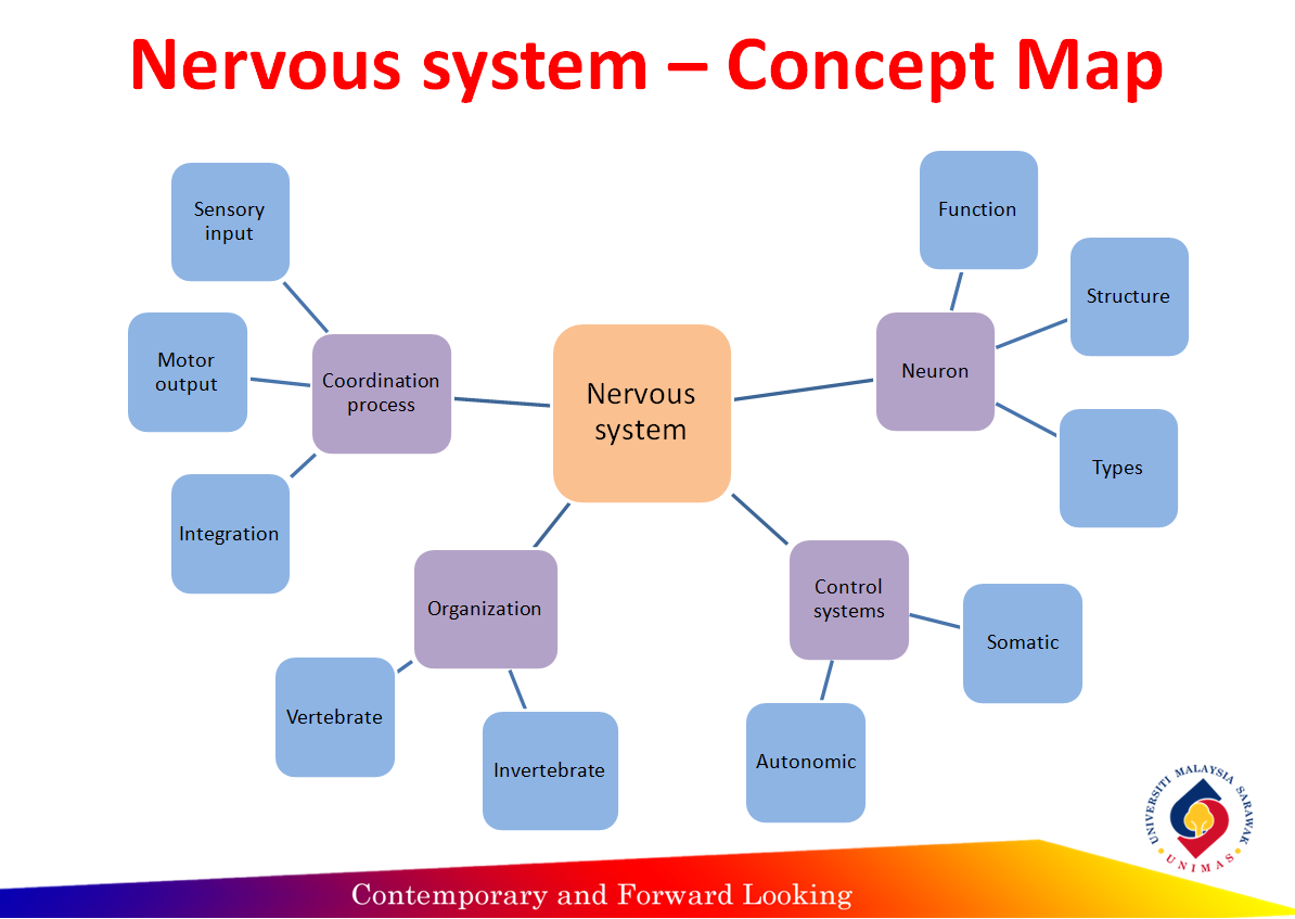 Concept Map Nervous System Answers.Animal Physiology Part 3 Reflection Concept Map